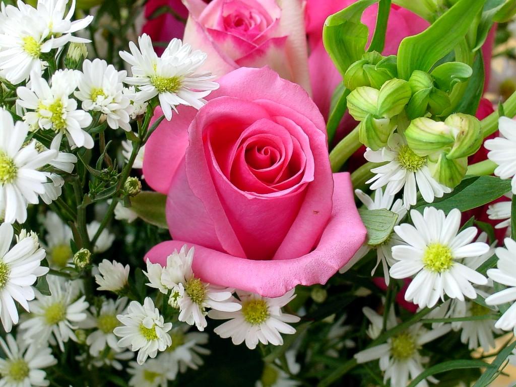 鲜花 送给绝美的朋友
