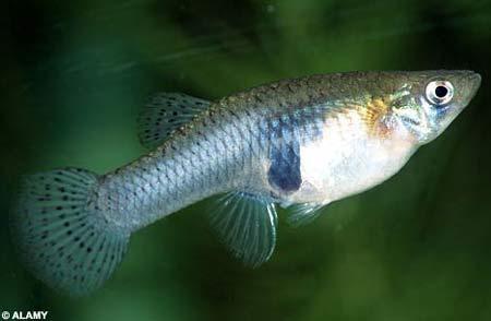 科学家发现鱼会数数能从1数到4