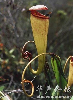 世界最奇异的植物图片