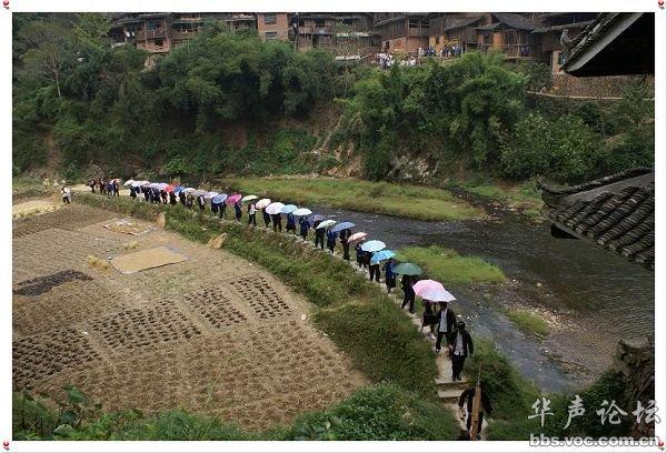 广西三江侗族自治县的斗牛 多图图片