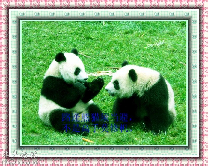 熊猫烧香诗词高清图片