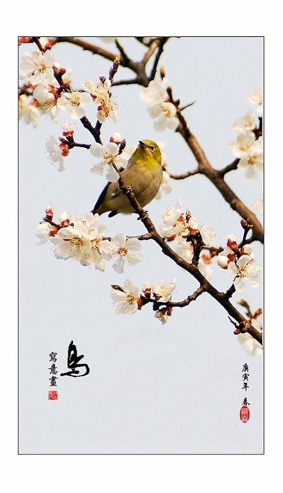 写意摄画 鸟语花香