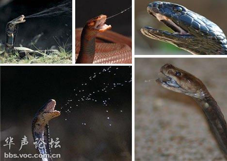 跳跃前,青蛙会让自己处于蹲伏姿势同时拉伸后肢肌肉,挑战物理学定