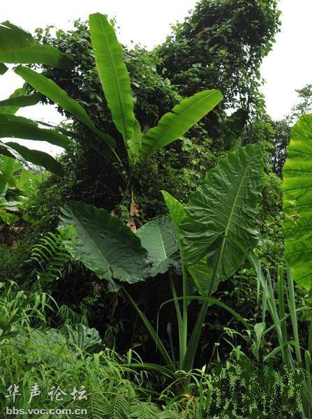 海南岛热带雨林_海南五指山热带雨林探秘 千奇百怪的动植物 - 千奇百怪 - 华声论坛