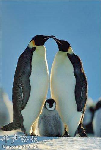 动物世界中伟大的母爱