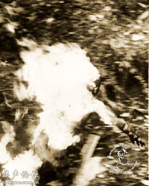 盟军婆罗洲战役中烧死鬼子全过程