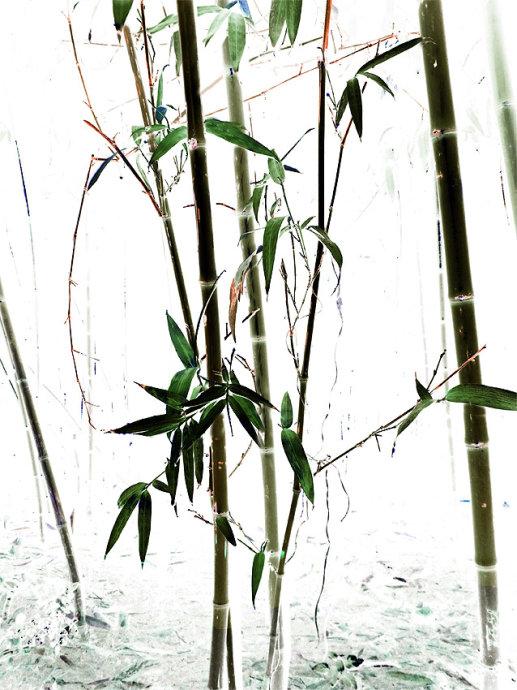 仿国画水墨画竹子摄影