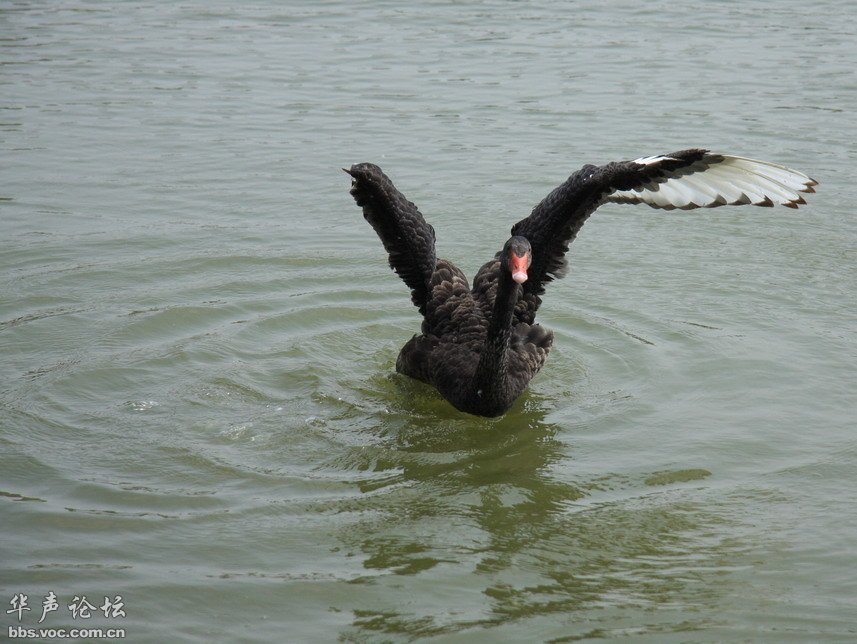 谁折断了你的翅膀 记实湿地鸟类们
