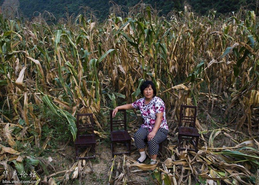 8楼 陕西省旬阳县白柳镇,胡尔桂在村里的玉米地里(2011年8
