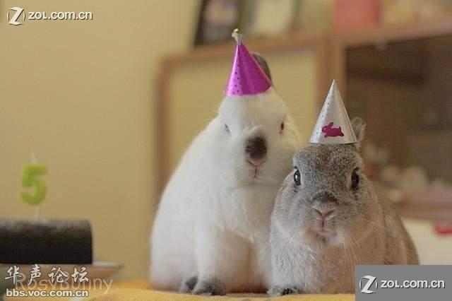 卖萌的兔子 太可爱啦图片