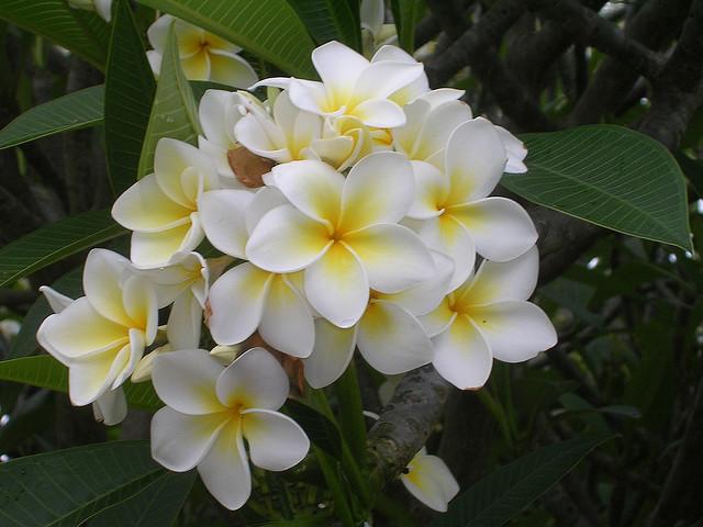 10种世界上最美的花图片