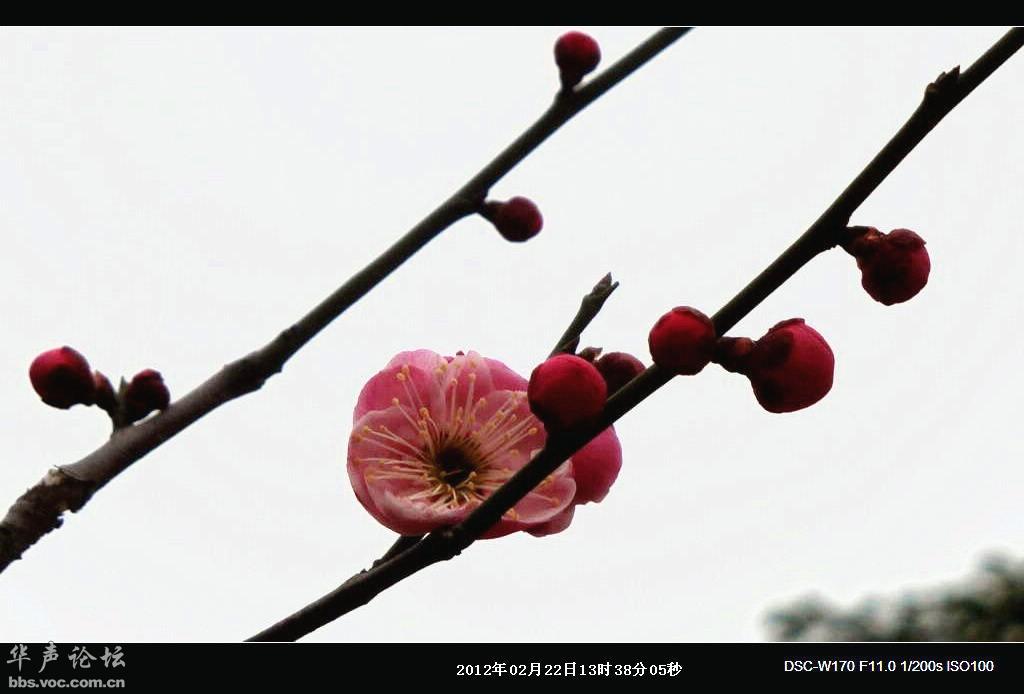 春天到了 迎春花开了