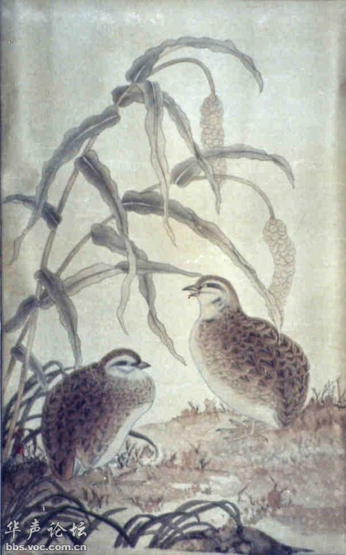 手工种子贴画图鹅-画欣赏 书法 绘画