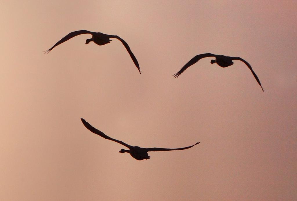 美丽风景人间仙境--山东明光电缆有限公司【13964146988,13188879228】 - lidaifeng88 - 胡杨的博客