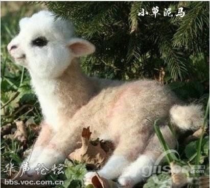 动物刚生出来的样子,爆可爱啊