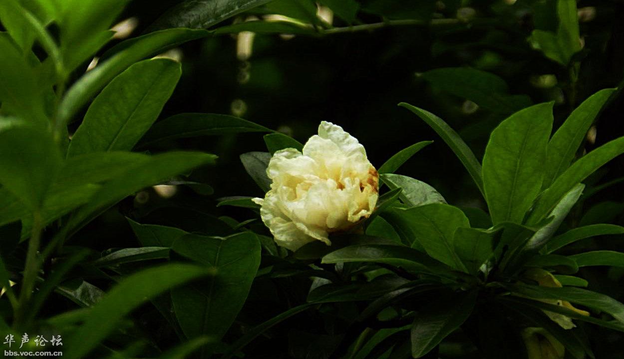 水杉叶和石榴花