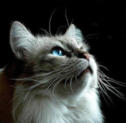 猫咪唯美图片 45度角仰望天空