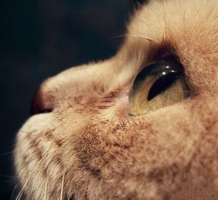 可爱的猫咪唯美图片 45度角仰望天空