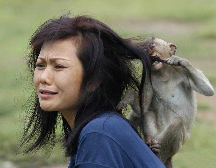 亚洲人口动物趣事_人口普查