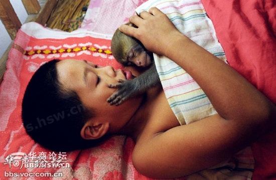 黄爱青在训练猴子学骑车子.-养猴子真不容易,还要亲自给猴崽喂人奶图片