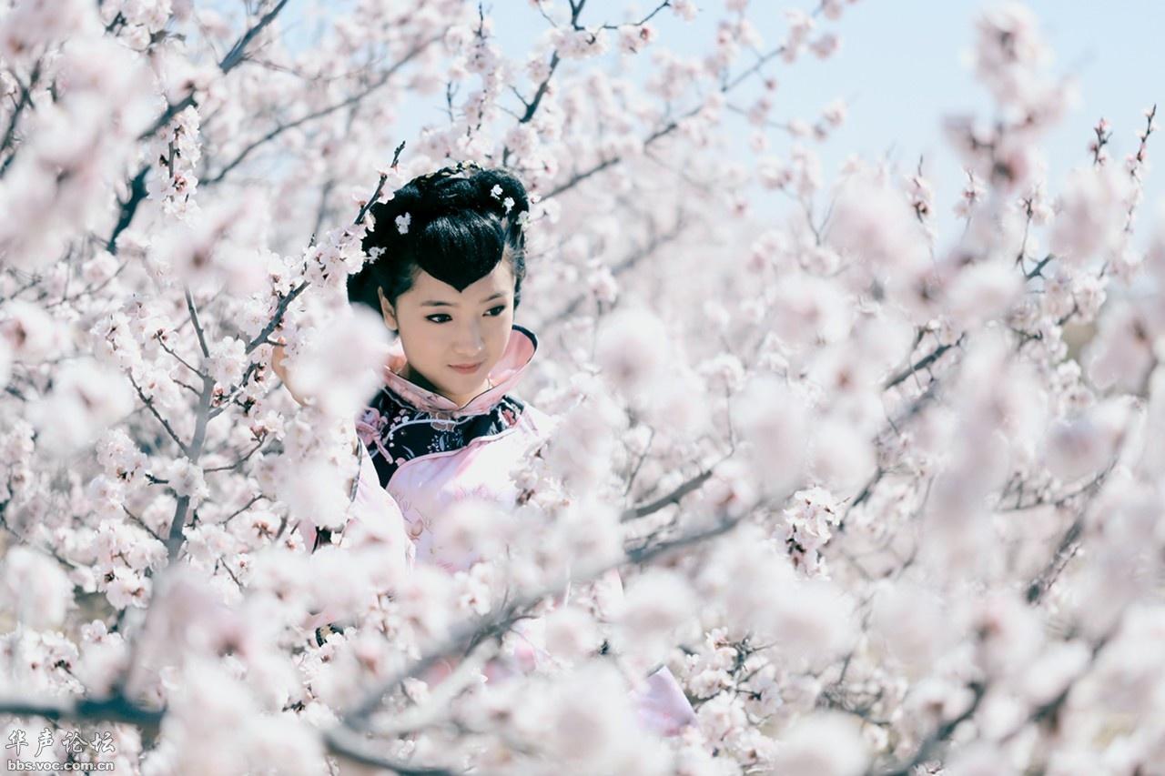 4535,千树万枝杏花白(原创) - 春风化雨 - 春风化雨的博客