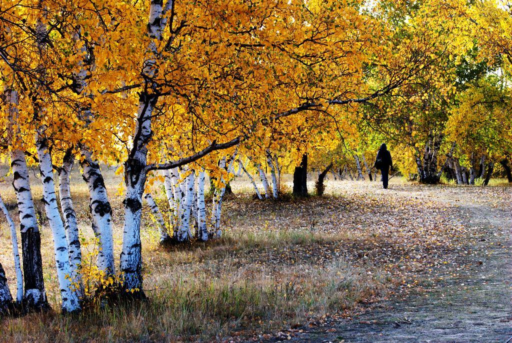 秋天的童话
