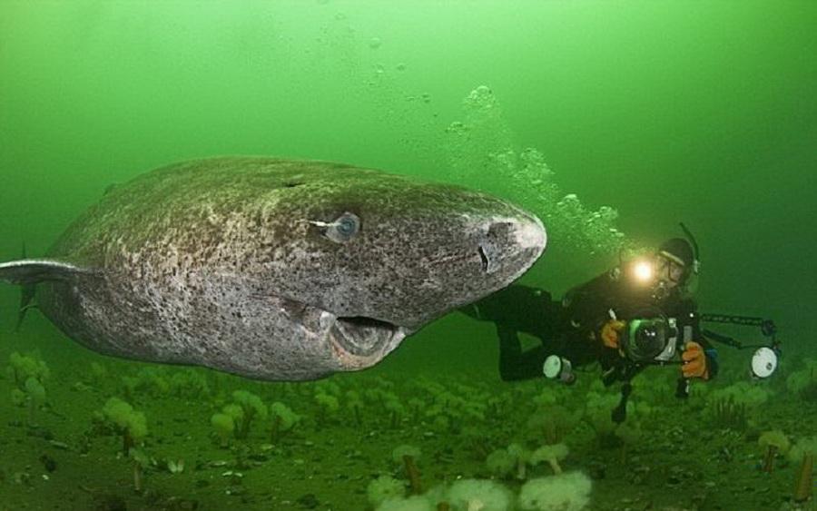 图文 * 生活在海洋中的11种极端生物!* 推荐