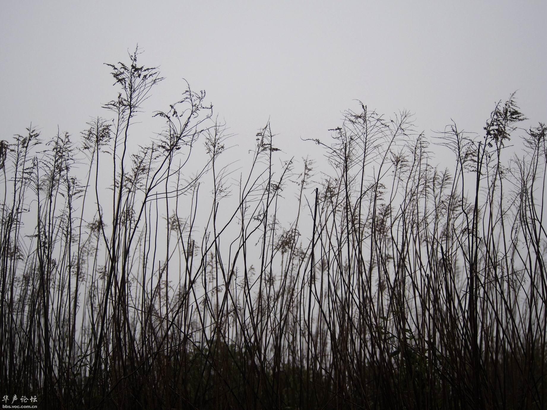 雾中的风景高清图片