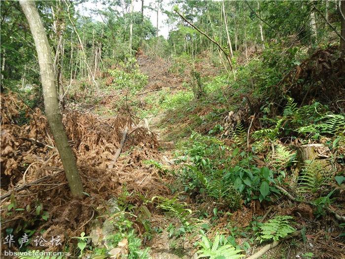 黄山祁门牯牛降风景区公益林被疯狂砍伐