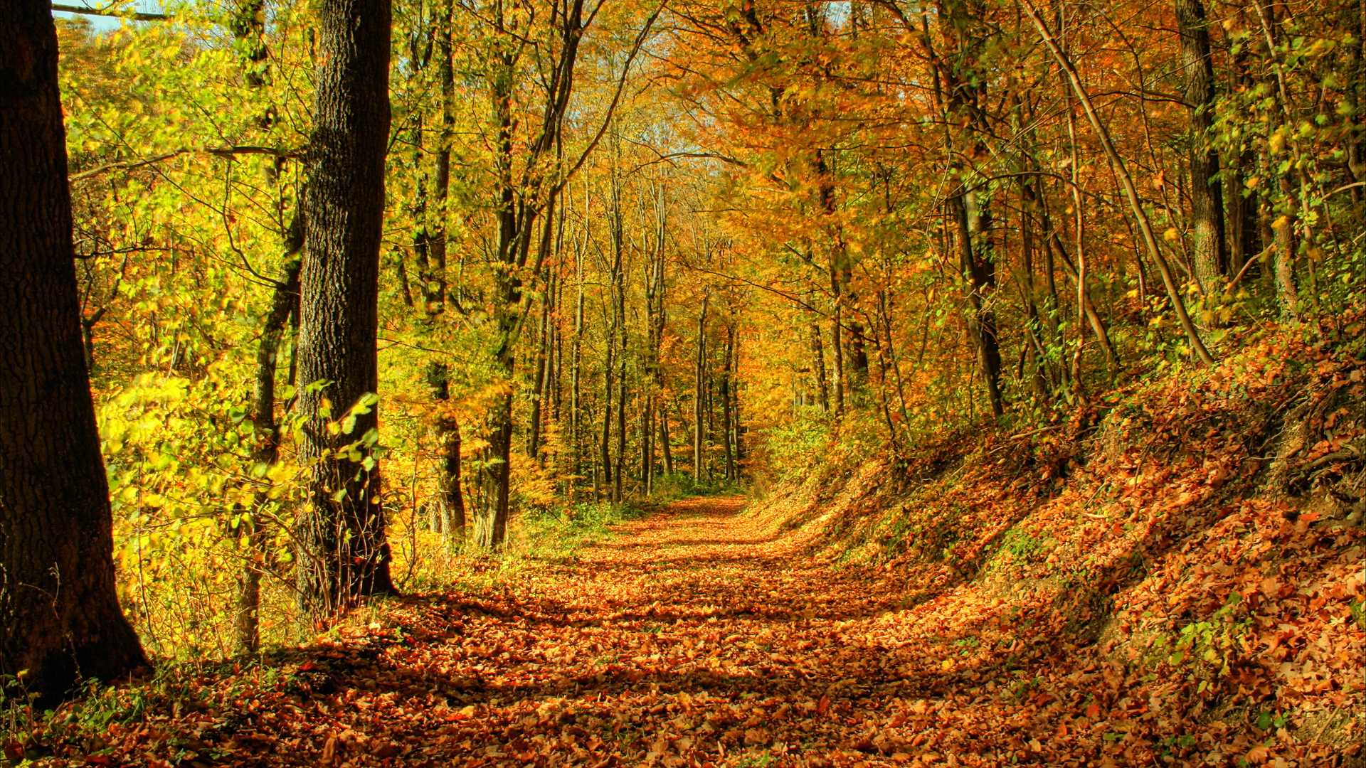 秋天的景色