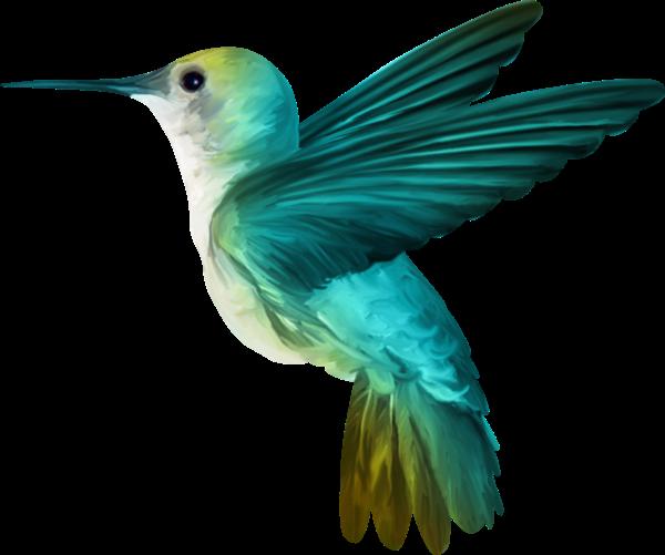 Картинки красивые птицы