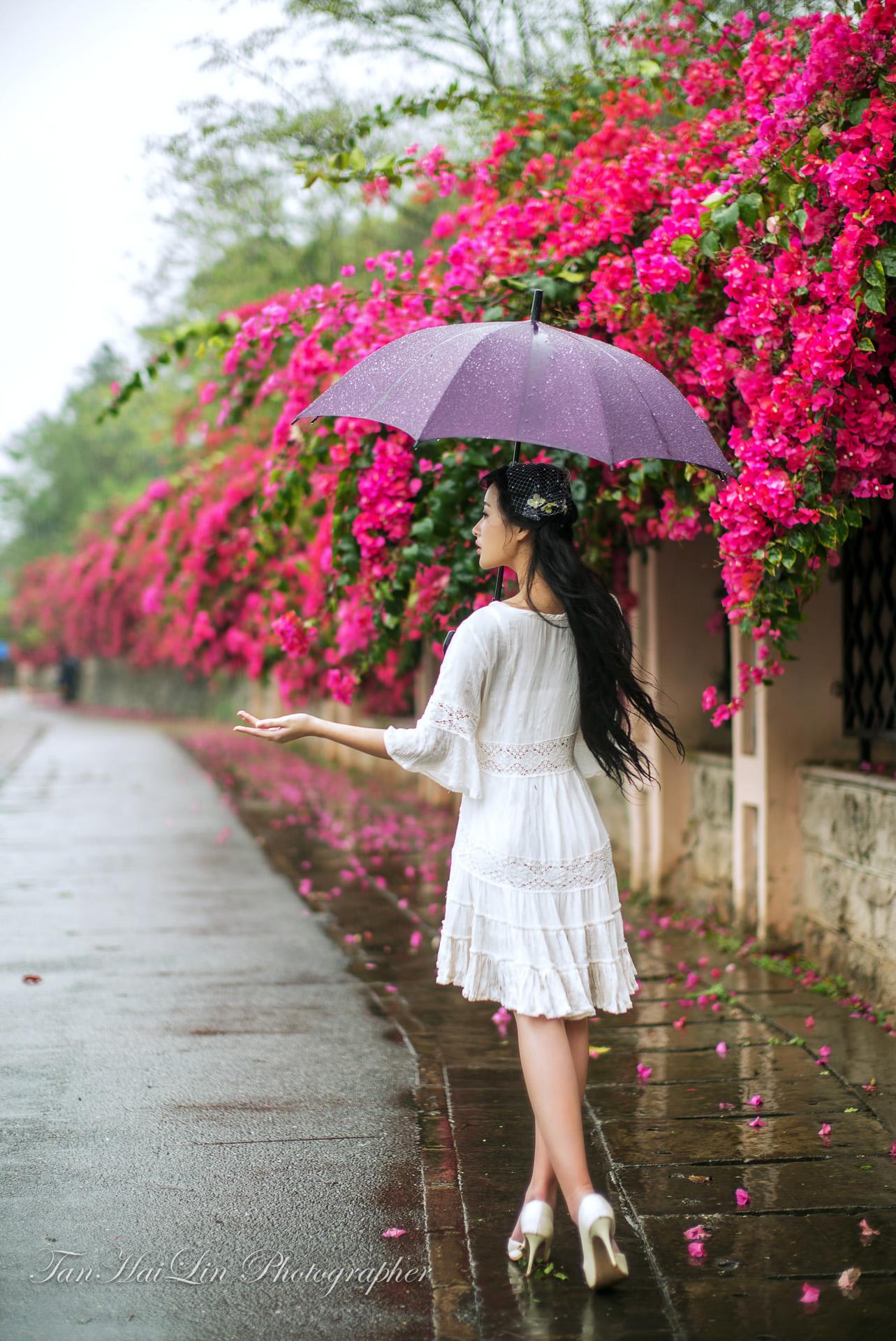 雨中梅 - 花開有聲 - 花開有聲的博客