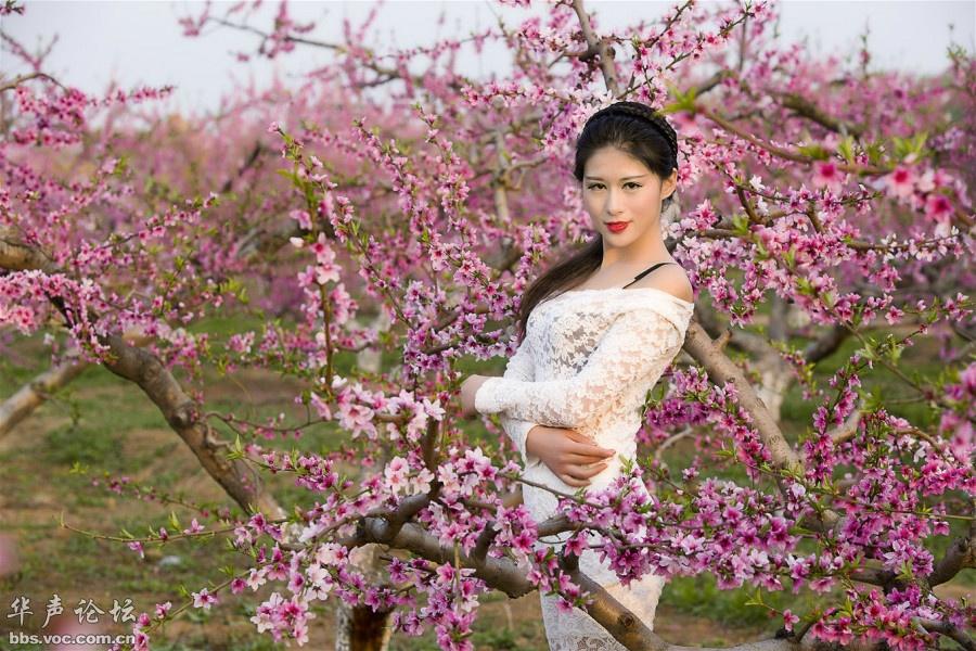 人面桃花相映红 - 花開有聲 - 花開有聲