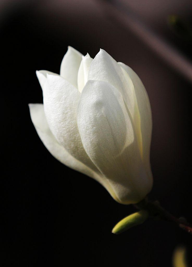 美丽的鲜花在开放