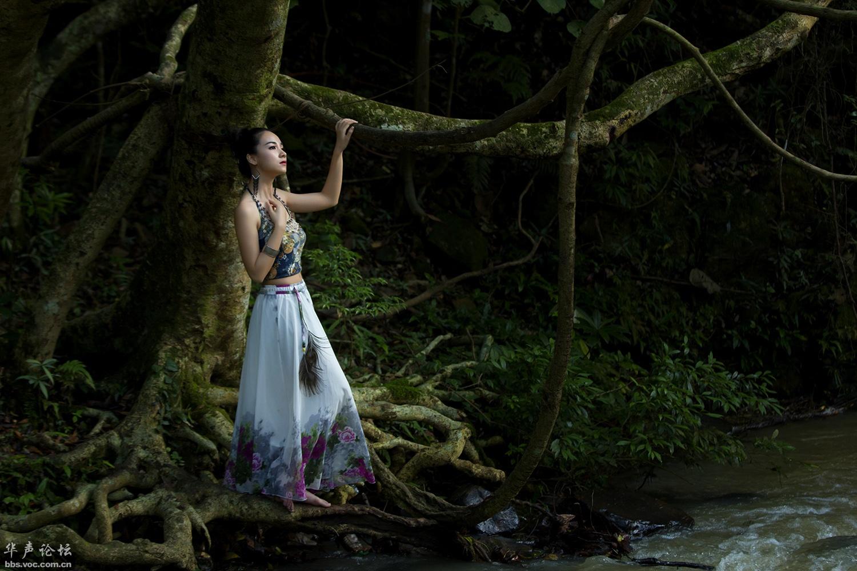 森林深处 - 春晖 - 春晖的博客