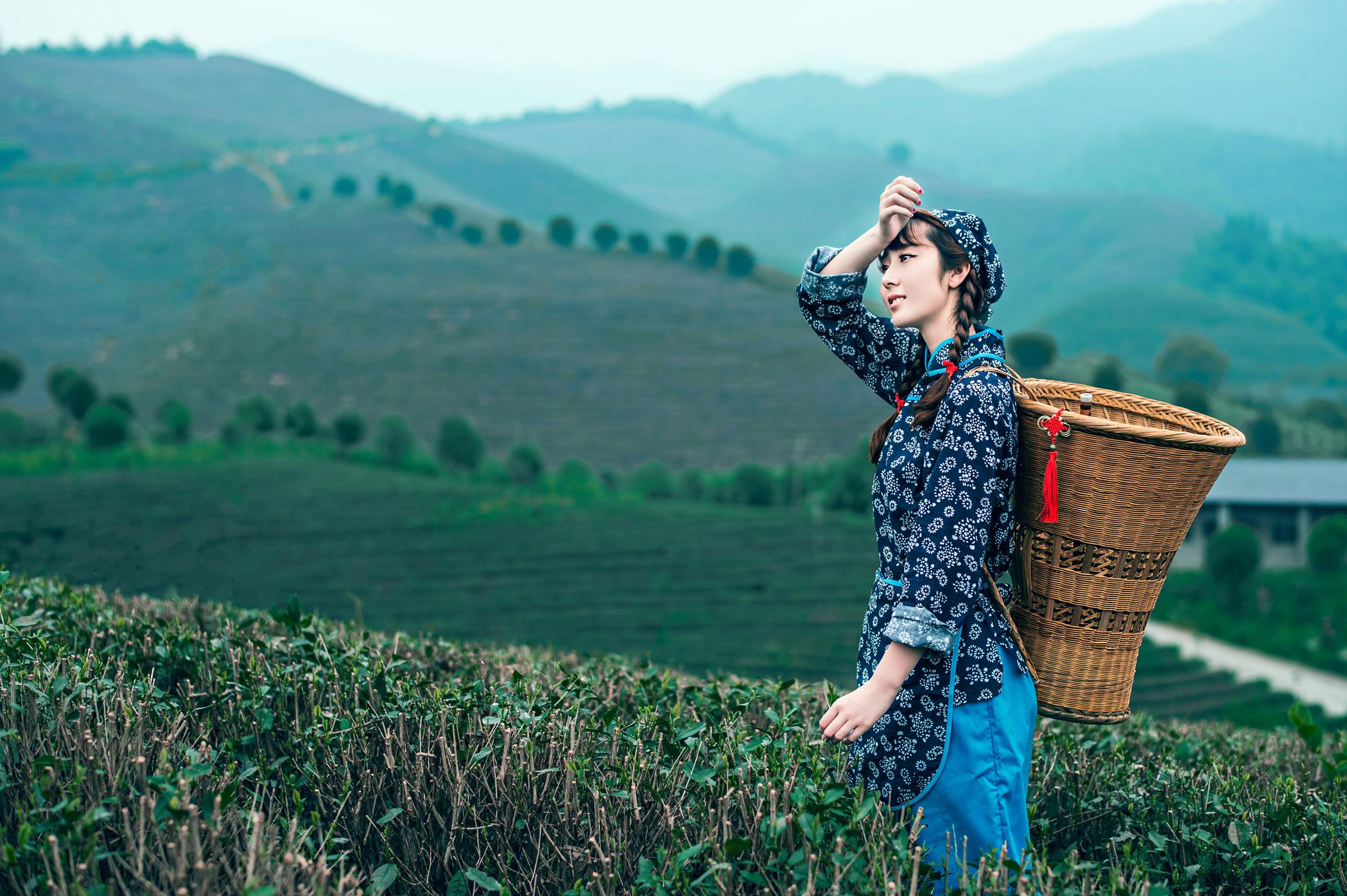 中国高山上来了一采茶美少女-茶女背影-南岳好男生图片肩膀靠女生图片