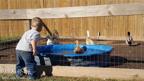 他的小伙伴只有两条腿,而且不是 当然,家里养鸭子也没什么稀奇的