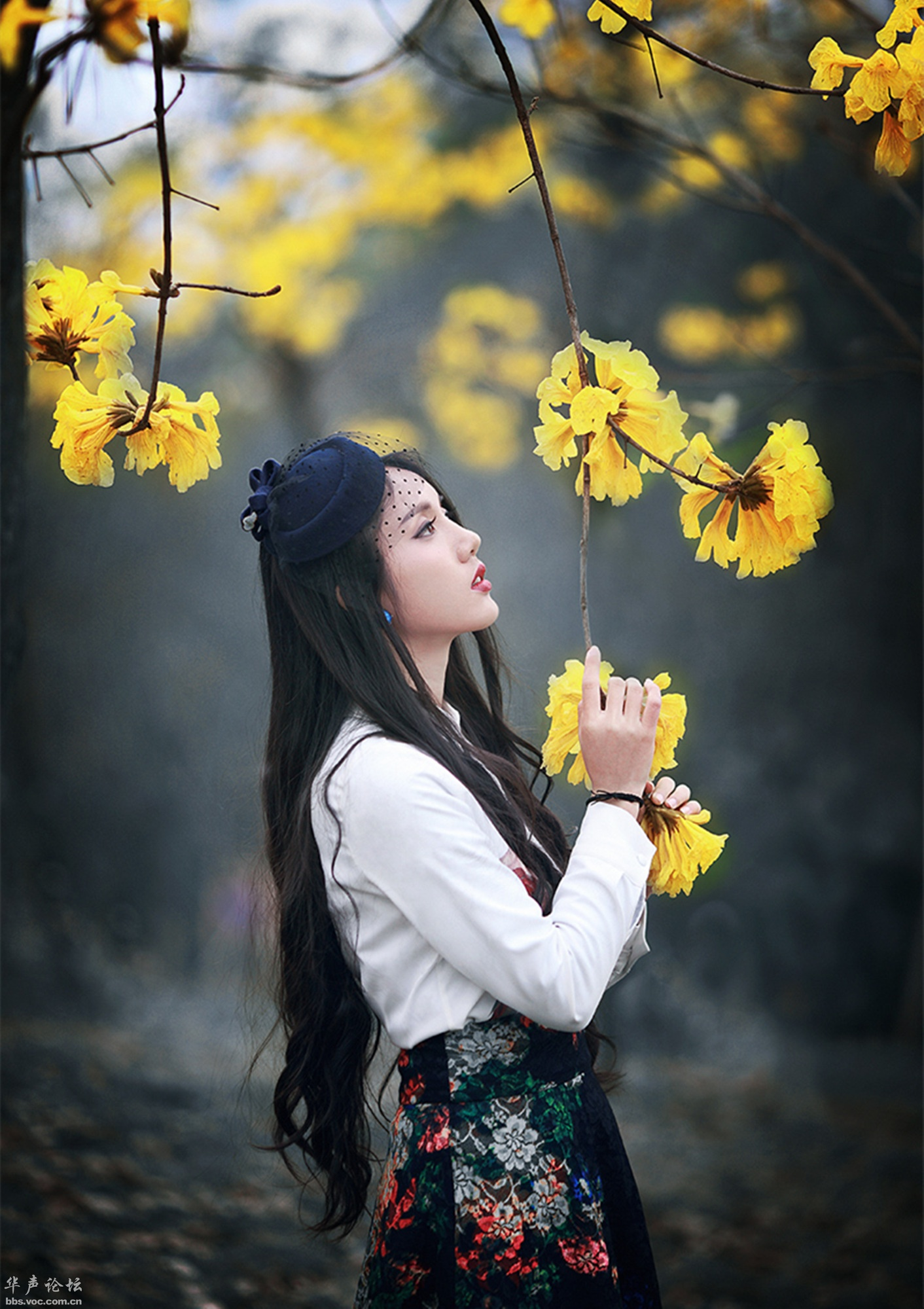 黄花美女 - 花開有聲 - 花開有聲