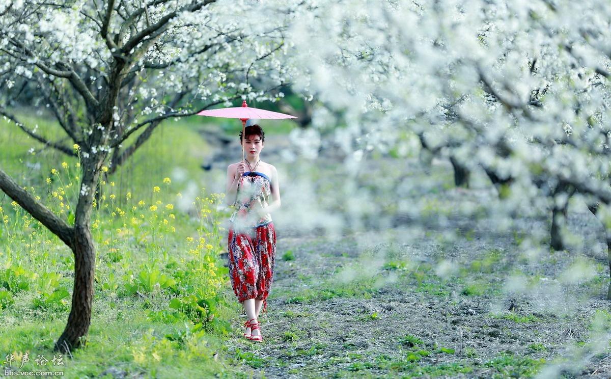 春天花事 - 花開有聲 - 花開有聲