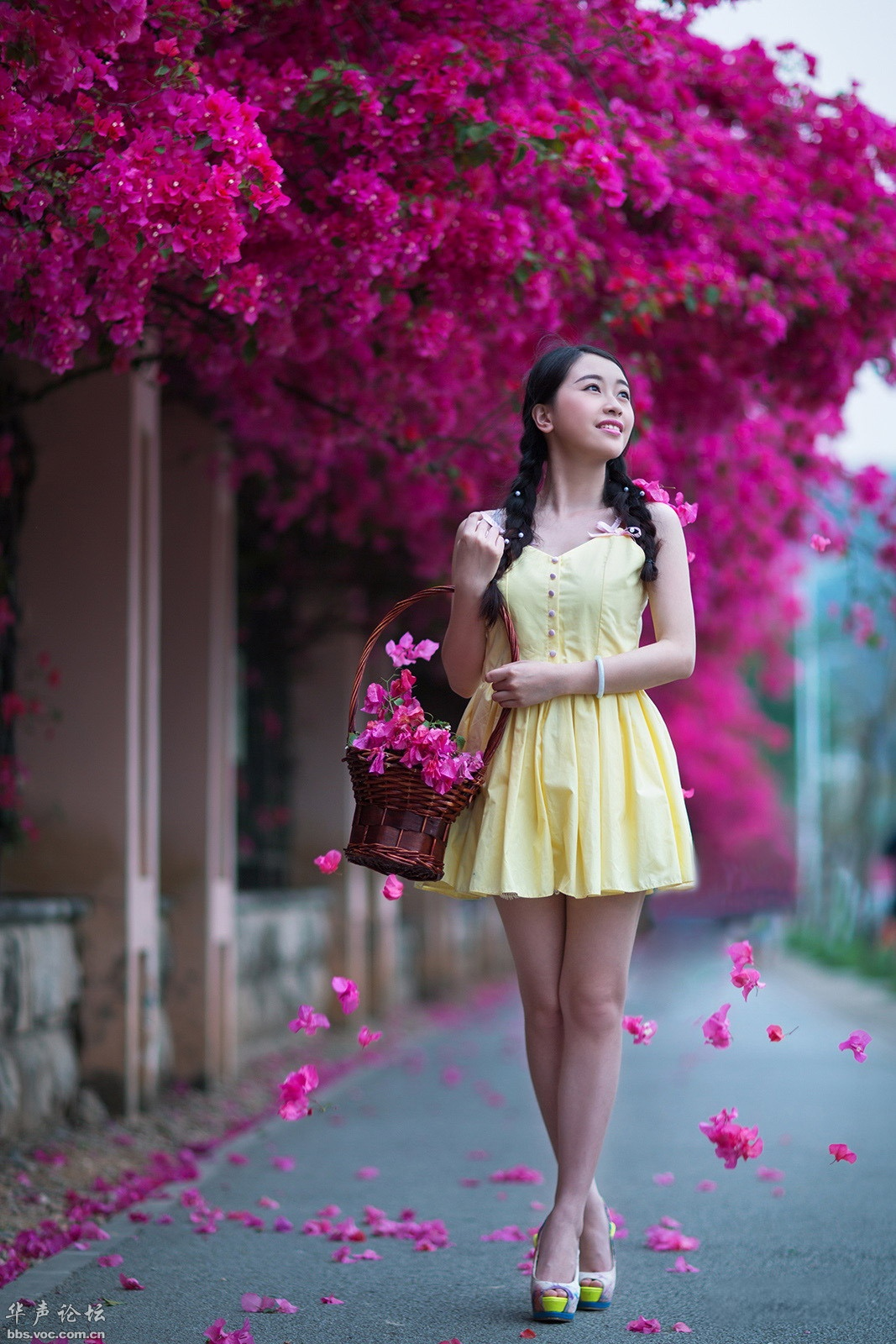 三角梅下的媚影 - 春色满园 - 春色满园