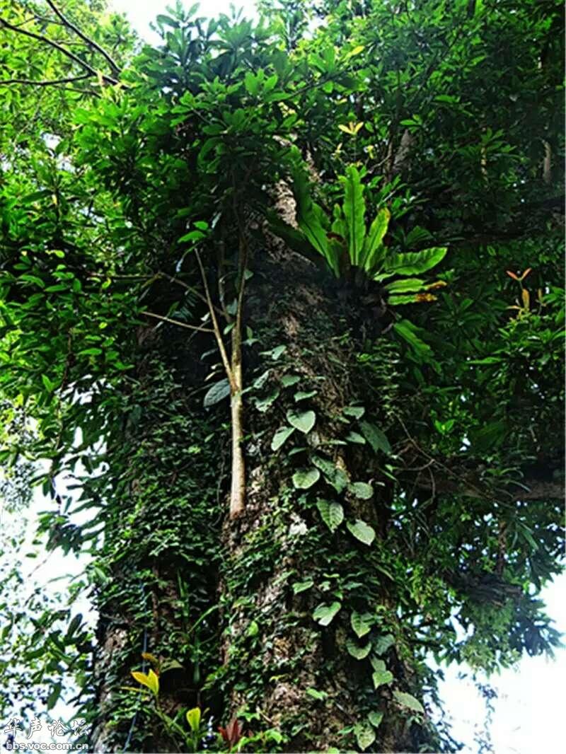 植物的系统层次_带你看热带雨林六大奇观[分享] - 游记·影像 - 华声论坛