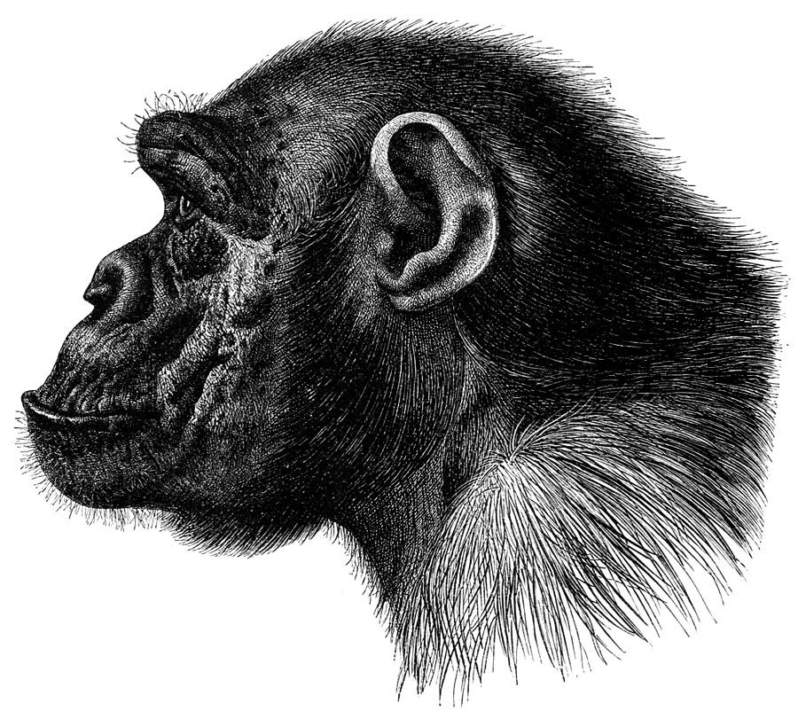 动物素描图片