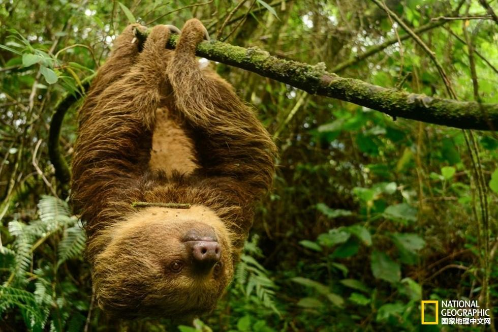 巨型树懒_[图文]*******盘点----世界上那些行动迟缓的动物*******[推荐