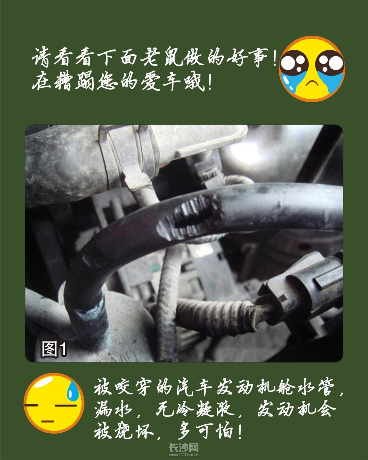 PIC_20120709_093954_85A_M.jpg