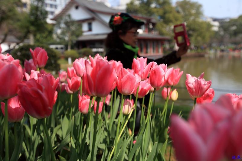 晓园·春--2.jpg