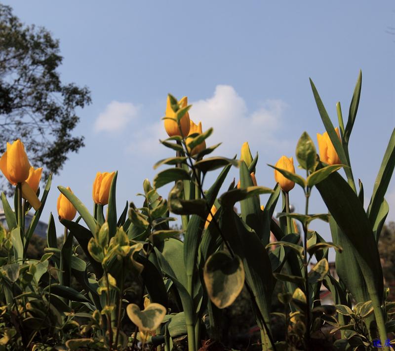 晓园·春--4.jpg