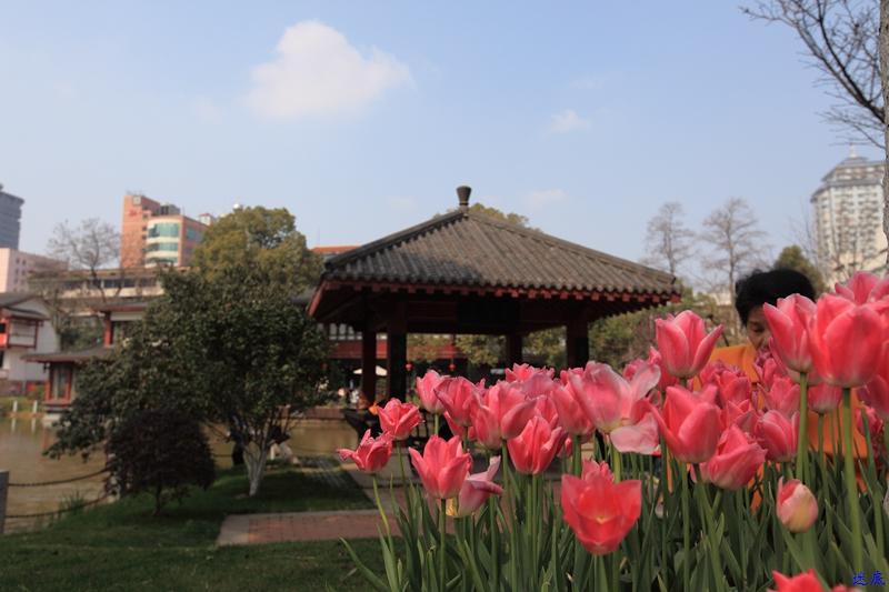 晓园·春--10.jpg