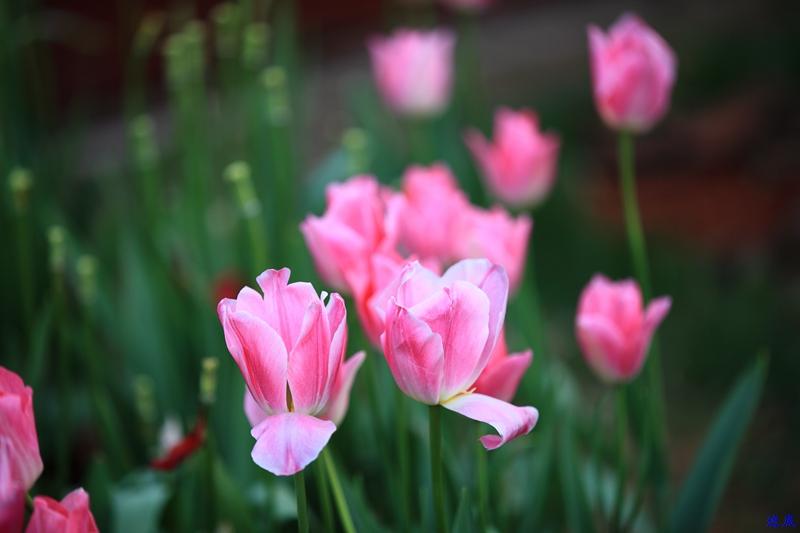 晓园·春--36.jpg