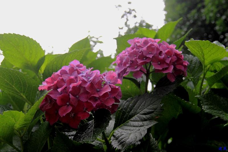 植物园--22_副本.jpg