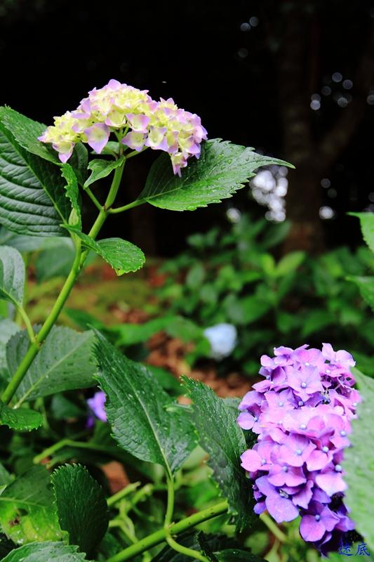 植物园--25.jpg